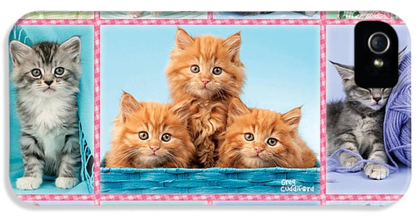 Wool iPhone 5 Cases - Kittens Gingham Multi-pic iPhone 5 Case by Greg Cuddiford