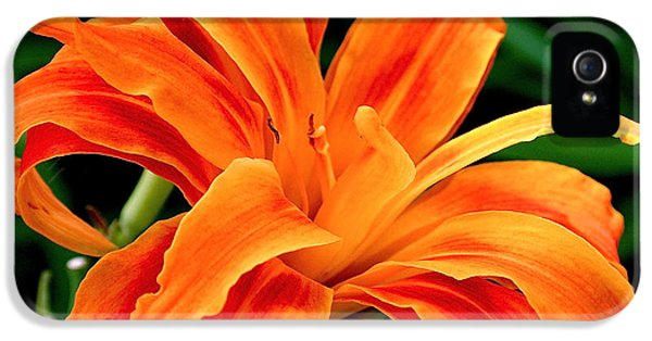 Square iPhone 5 Cases - Kwanso Lily iPhone 5 Case by Rona Black