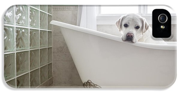 Look iPhone 5 Cases - Lab in a Bathtub iPhone 5 Case by Diane Diederich