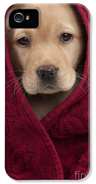 Canid iPhone 5 Cases - Labrador Puppy In Towel iPhone 5 Case by Jean-Michel Labat