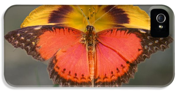 Arthropod iPhone 5 Cases - Lacewing Butterfly on Lily iPhone 5 Case by Douglas Barnett