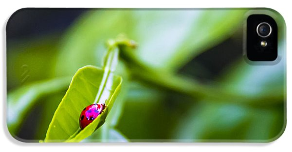Tangerine iPhone 5 Cases - Ladybug Cup iPhone 5 Case by Marvin Spates