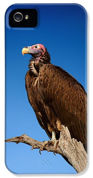 Prey iPhone 5 Cases - Lappetfaced Vulture against blue sky iPhone 5 Case by Johan Swanepoel