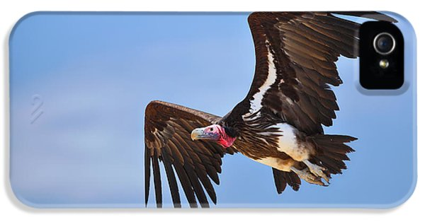 Prey iPhone 5 Cases - Lappetfaced Vulture iPhone 5 Case by Johan Swanepoel