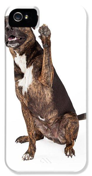 Greet iPhone 5 Cases - Large Brindle Dog Raising Paw iPhone 5 Case by Susan  Schmitz
