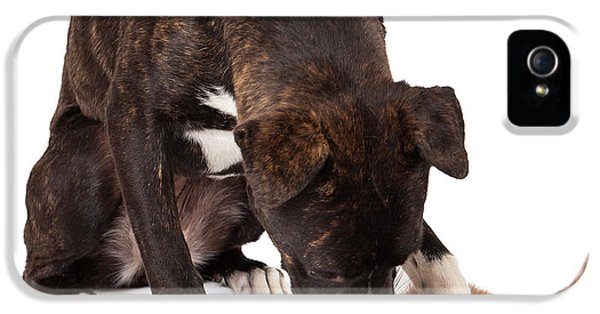 Indoors iPhone 5 Cases - Large dog playing with kitten iPhone 5 Case by Susan  Schmitz
