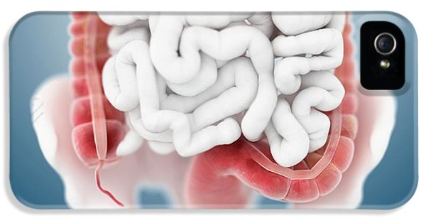 Large Intestine IPhone 5 / 5s Case by Springer Medizin