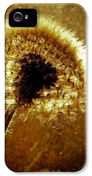 Dreamscape iPhone 5 Cases - Last light of day iPhone 5 Case by Bob Orsillo
