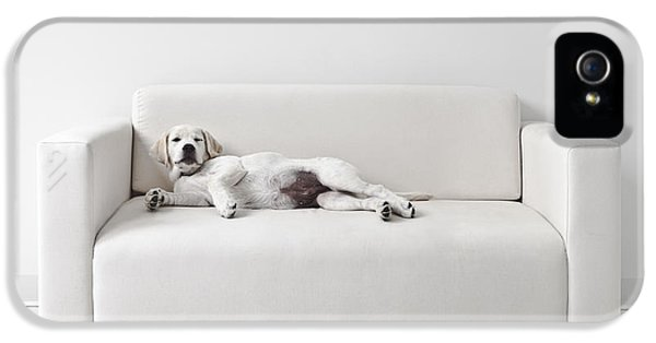 Sofa iPhone 5 Cases - Lazy Dog on the Sofa iPhone 5 Case by Diane Diederich