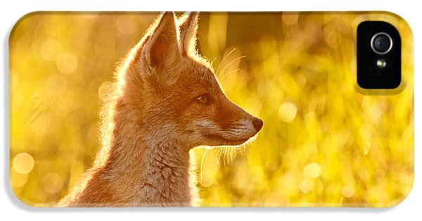 Red Fox iPhone 5 Cases - Le Ptit Renard iPhone 5 Case by Roeselien Raimond
