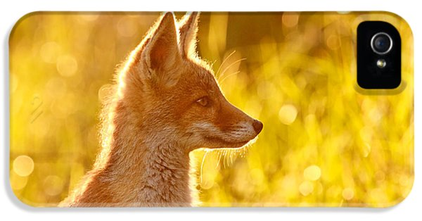Young Foxes iPhone 5 Cases - Le Ptit Renard iPhone 5 Case by Roeselien Raimond