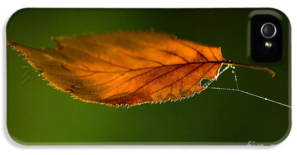 Leaf iPhone 5 Cases - Leaf on Spiderwebstring iPhone 5 Case by Iris Richardson