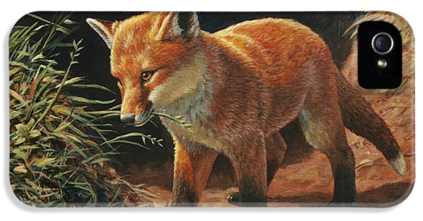 Fox iPhone 5 Cases - Red Fox Pup - Learning iPhone 5 Case by Crista Forest