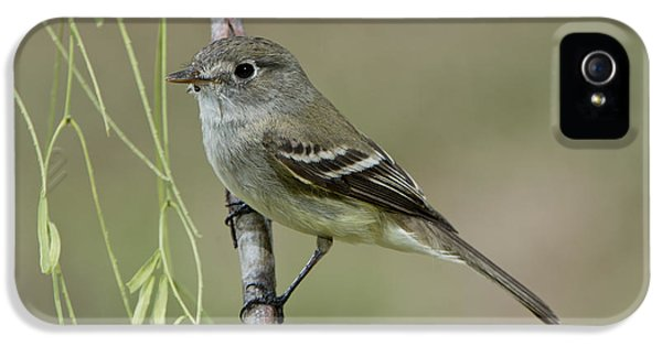 Least Flycatcher IPhone 5 / 5s Case by Anthony Mercieca