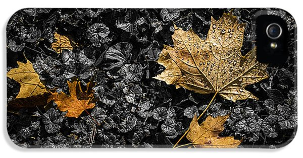 Leaves On Forest Floor IPhone 5 / 5s Case by Tom Mc Nemar