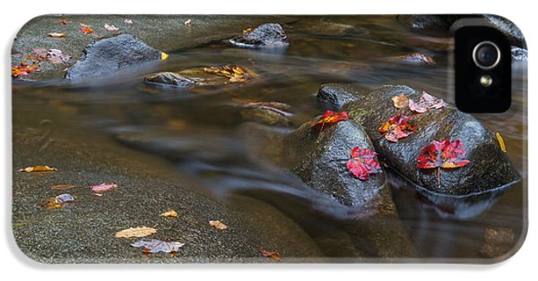 Vibrant iPhone 5 Cases - Leaves on the River Path iPhone 5 Case by Andres Leon
