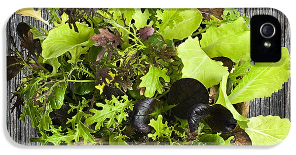 Lettuce Seedlings IPhone 5 / 5s Case by Elena Elisseeva