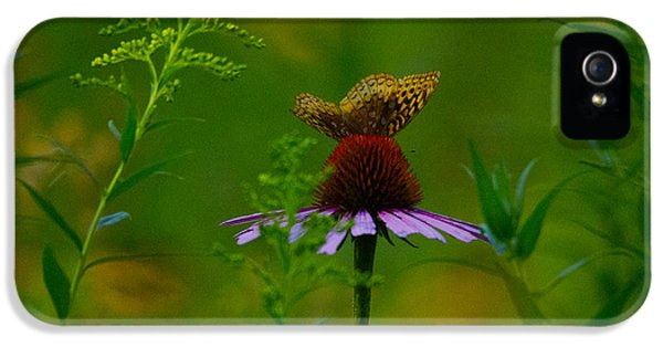 Cone Flowers And Butterflies iPhone 5 Cases - Light in the shade iPhone 5 Case by David Tennis