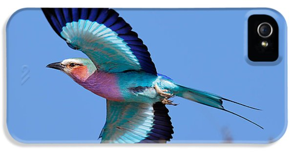 Coloured iPhone 5 Cases - Lilac-breasted Roller in flight iPhone 5 Case by Johan Swanepoel