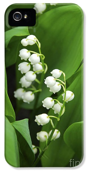 Growth iPhone 5 Cases - Lily-of-the-valley  iPhone 5 Case by Elena Elisseeva
