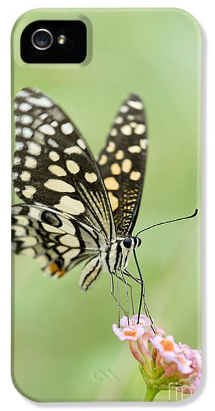 Swallowtail iPhone 5 Cases - Lime Butterfly Feeding iPhone 5 Case by Tim Gainey