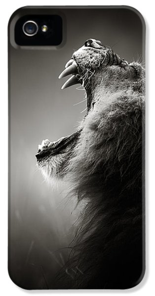 Artistic iPhone 5 Cases - Lion displaying dangerous teeth iPhone 5 Case by Johan Swanepoel