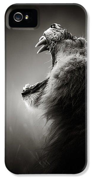 Mane iPhone 5 Cases - Lion displaying dangerous teeth iPhone 5 Case by Johan Swanepoel