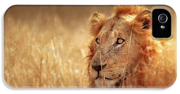 Mane iPhone 5 Cases - Lion in grass iPhone 5 Case by Johan Swanepoel