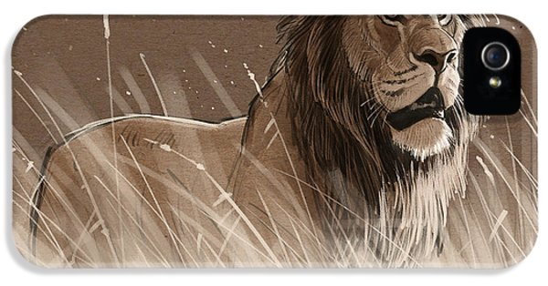 Lion iPhone 5 Cases - Lion in the Grass iPhone 5 Case by Aaron Blaise