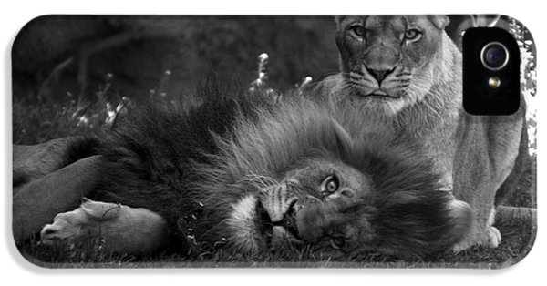 Central Il iPhone 5 Cases - Lions Me And My Guy iPhone 5 Case by Thomas Woolworth