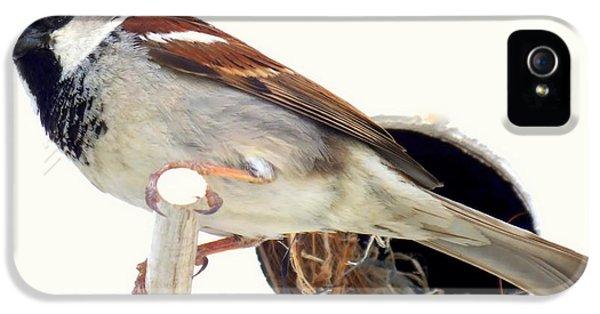 Little Sparrow IPhone 5 / 5s Case by Karen Wiles