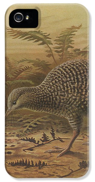 Little Spotted Kiwi IPhone 5 / 5s Case by J G Keulemans