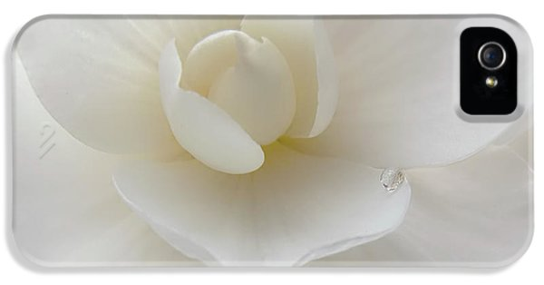 Ivory Flower iPhone 5 Cases - Little Raindrop White Begonia Flower  iPhone 5 Case by Jennie Marie Schell