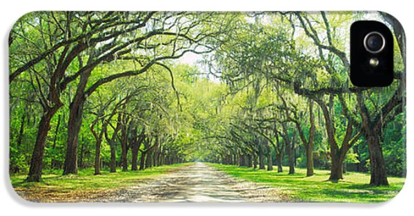 Historic Oak iPhone 5 Cases - Live Oaks And Spanish Moss Wormsloe iPhone 5 Case by Panoramic Images