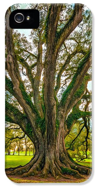 Historic Oak iPhone 5 Cases - Living Art - Paint iPhone 5 Case by Steve Harrington