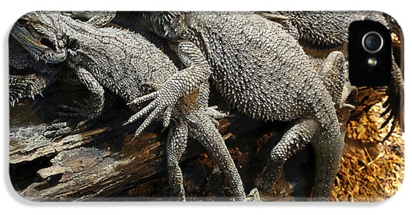 Cooperation iPhone 5 Cases - Lizards iPhone 5 Case by Les Cunliffe