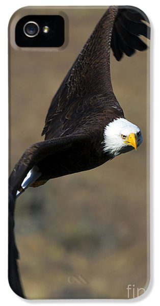 American Bald Eagle iPhone 5 Cases - Locked In iPhone 5 Case by Mike  Dawson