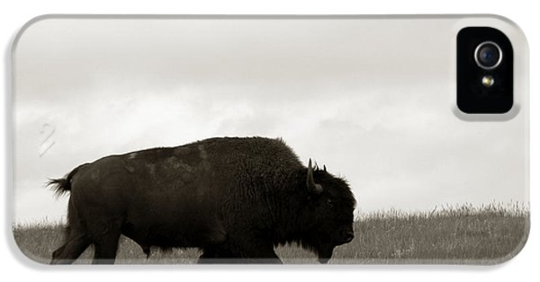 Roaming iPhone 5 Cases - Lone Bison iPhone 5 Case by Olivier Le Queinec