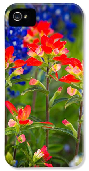Lupine iPhone 5 Cases - Lone Star Blooms iPhone 5 Case by Inge Johnsson