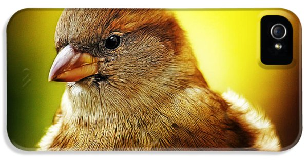 Passer Domesticus iPhone 5 Cases - Looking for a mate iPhone 5 Case by Nishanth Gopinathan