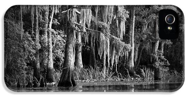 Bayou iPhone 5 Cases - Louisiana Bayou iPhone 5 Case by Mountain Dreams
