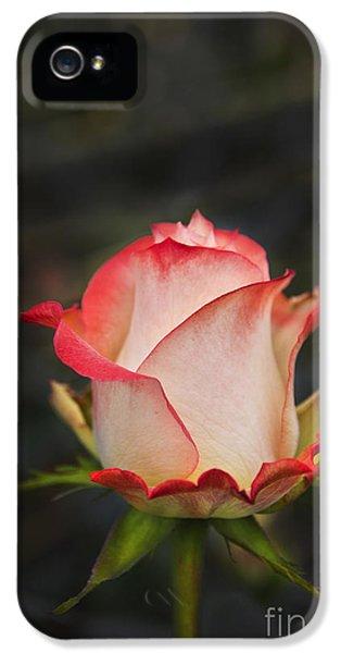 Love Is A Rose II IPhone 5 / 5s Case by Al Bourassa