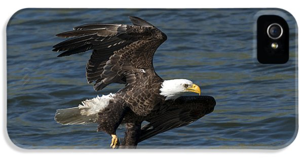 American Bald Eagle iPhone 5 Cases - Low Over the Water iPhone 5 Case by Mike  Dawson