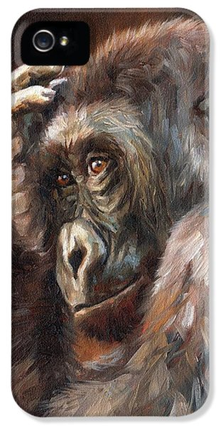 Lowland Gorilla IPhone 5 / 5s Case by David Stribbling