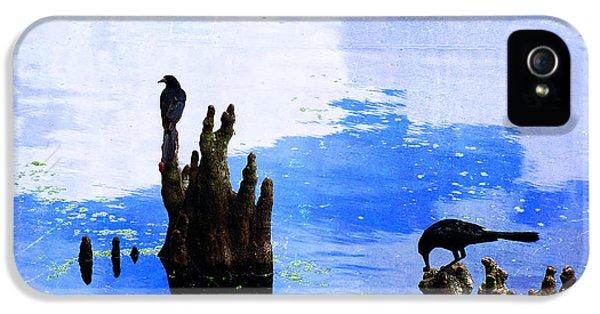 Lunch Break - Crow Art By Sharon Cummings IPhone 5 / 5s Case by Sharon Cummings