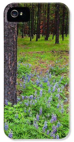 Lupine iPhone 5 Cases - Lupine Forest iPhone 5 Case by Mike  Dawson