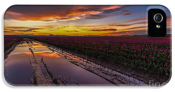 Tulips iPhone 5 Cases - Magenta Fields Tulips iPhone 5 Case by Mike Reid