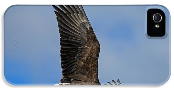 American Bald Eagle iPhone 5 Cases - Majestic Glide iPhone 5 Case by Mike Dawson