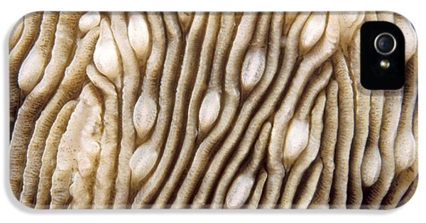 Polyp iPhone 5 Cases - Maldives Texture Montipora Danae iPhone 5 Case by Anonymous