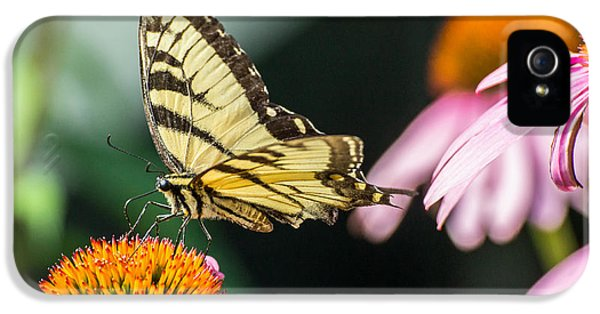 Cone Flowers And Butterflies iPhone 5 Cases - Male Eastern Tiger Swallowtail Butterfly iPhone 5 Case by Photographic Arts And Design Studio